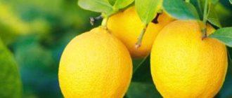 Лимон польза и вред для организма